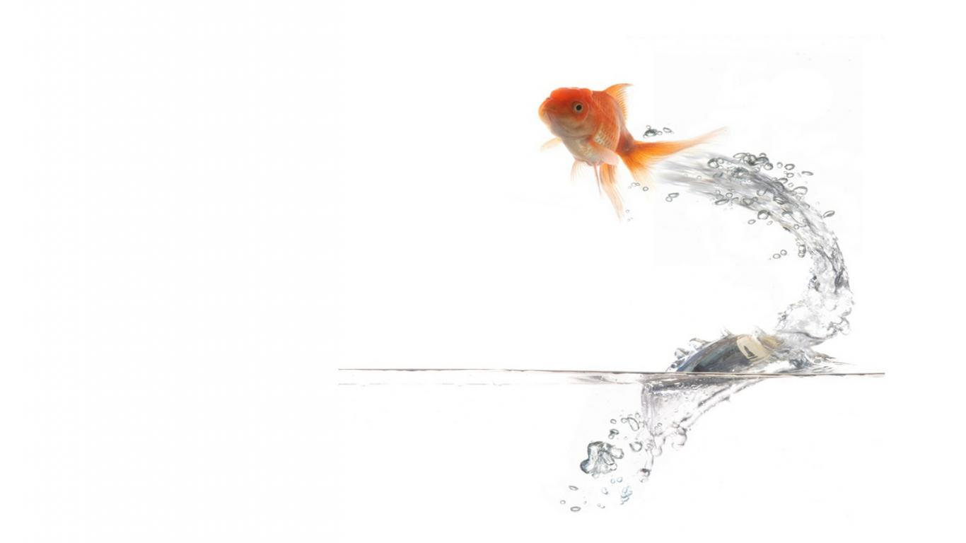 Wallpapers For > 3d Gold Fish Wallpapers