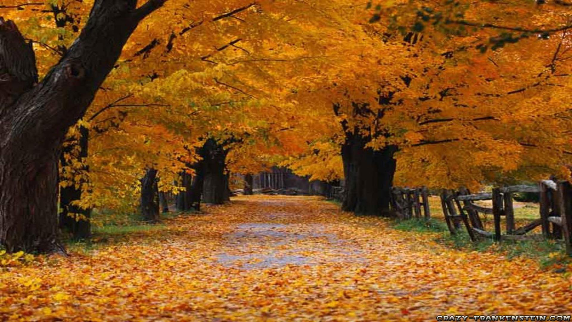 Free Autumn Wallpaper Backgrounds