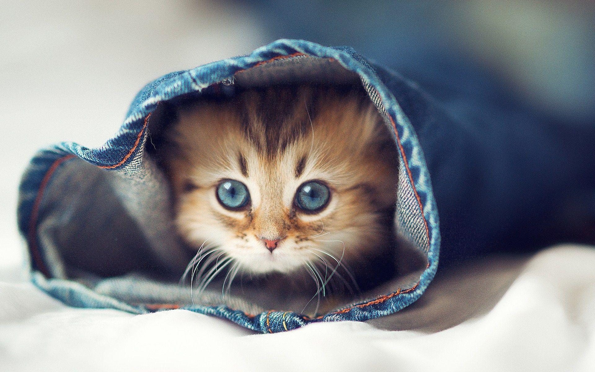 Kittens Wallpapers Download Kitten Wallpaper Border Funny Cute Cats