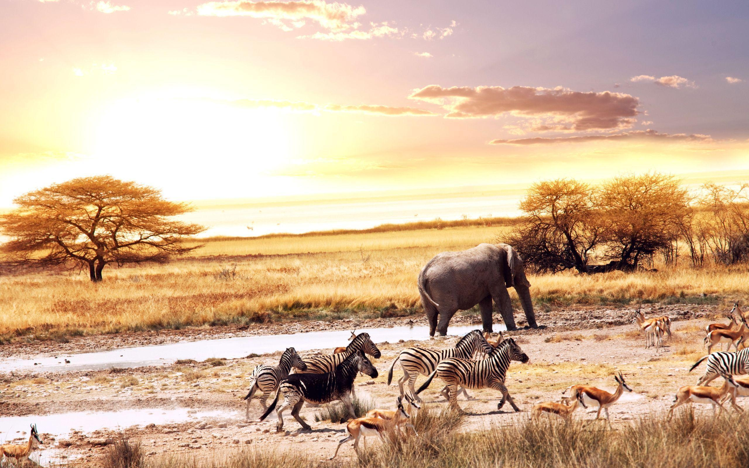 Wild Animals in Africa Wallpaper « Wallpaperz.