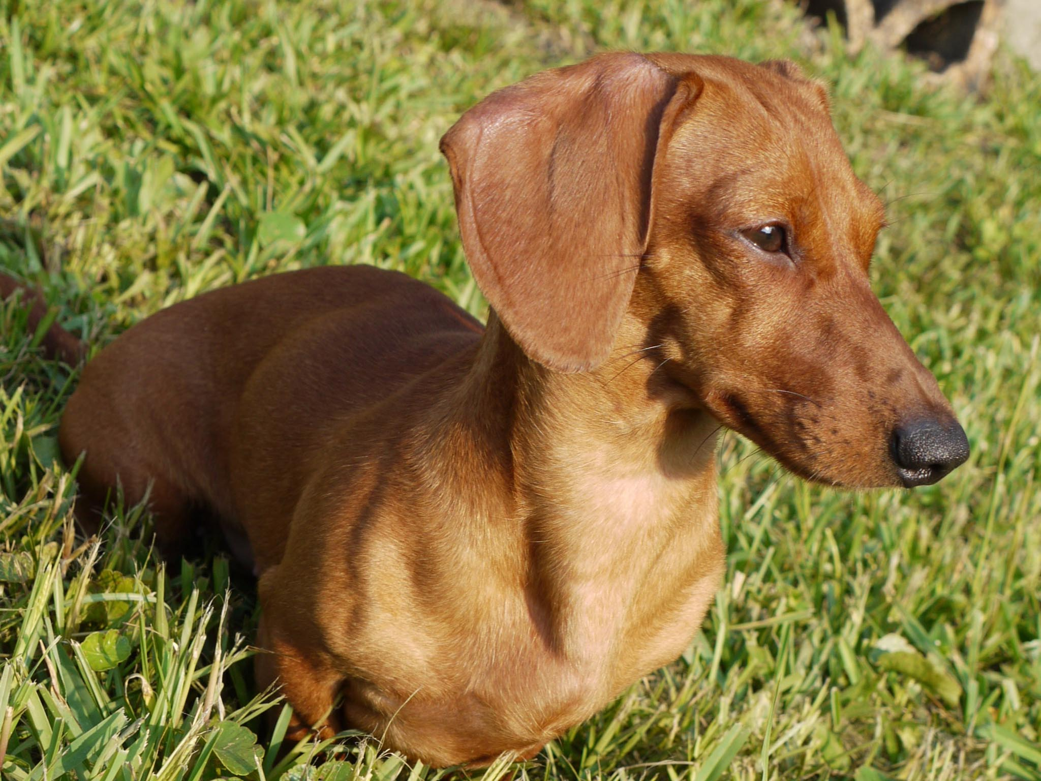 Watch Wiener Dog Online