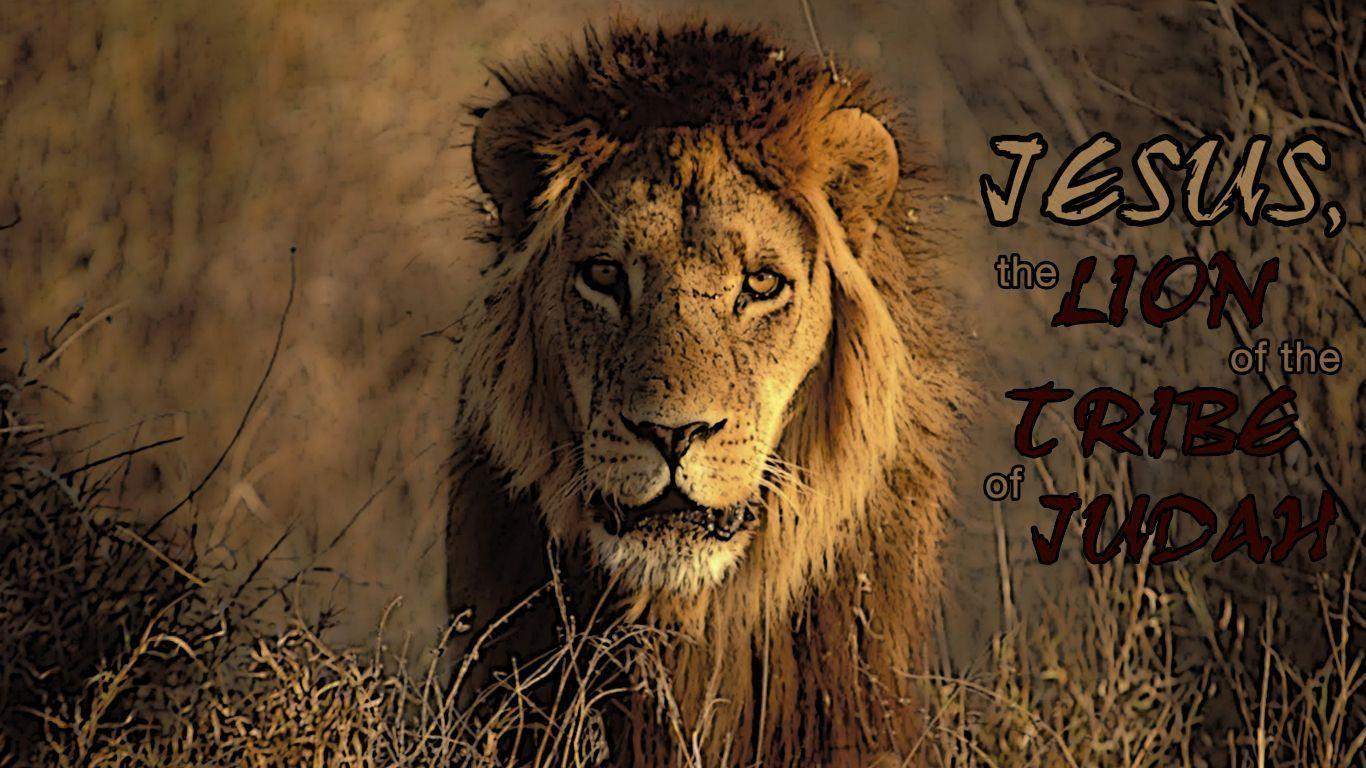 Wallpapers Lion Of Judah