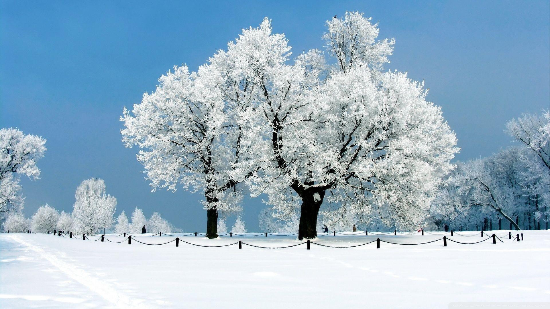 Winter Wallpaper 1920x1080 Backgrounds 47070 HD Pictures | Top ...