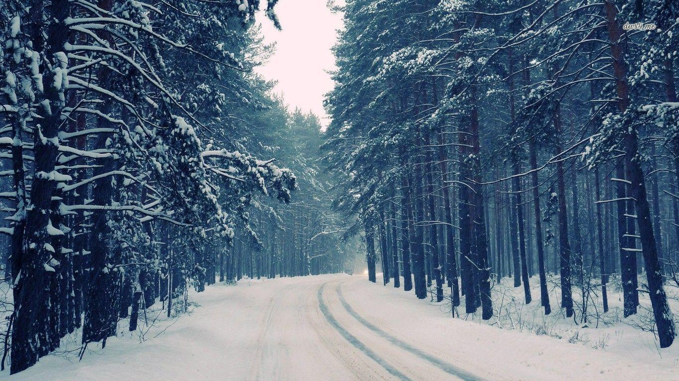 snow forest wallpapers wallpaper cave