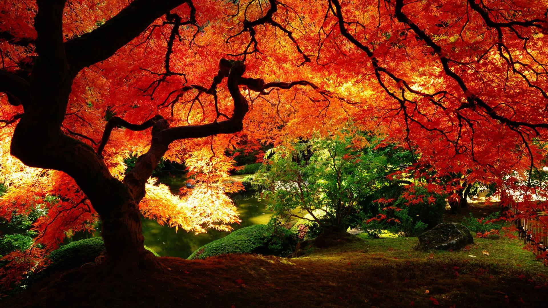 Japanese garden wallpaper - Japanese Garden Wallpaper Night Amazing Design 413852 Inspiration