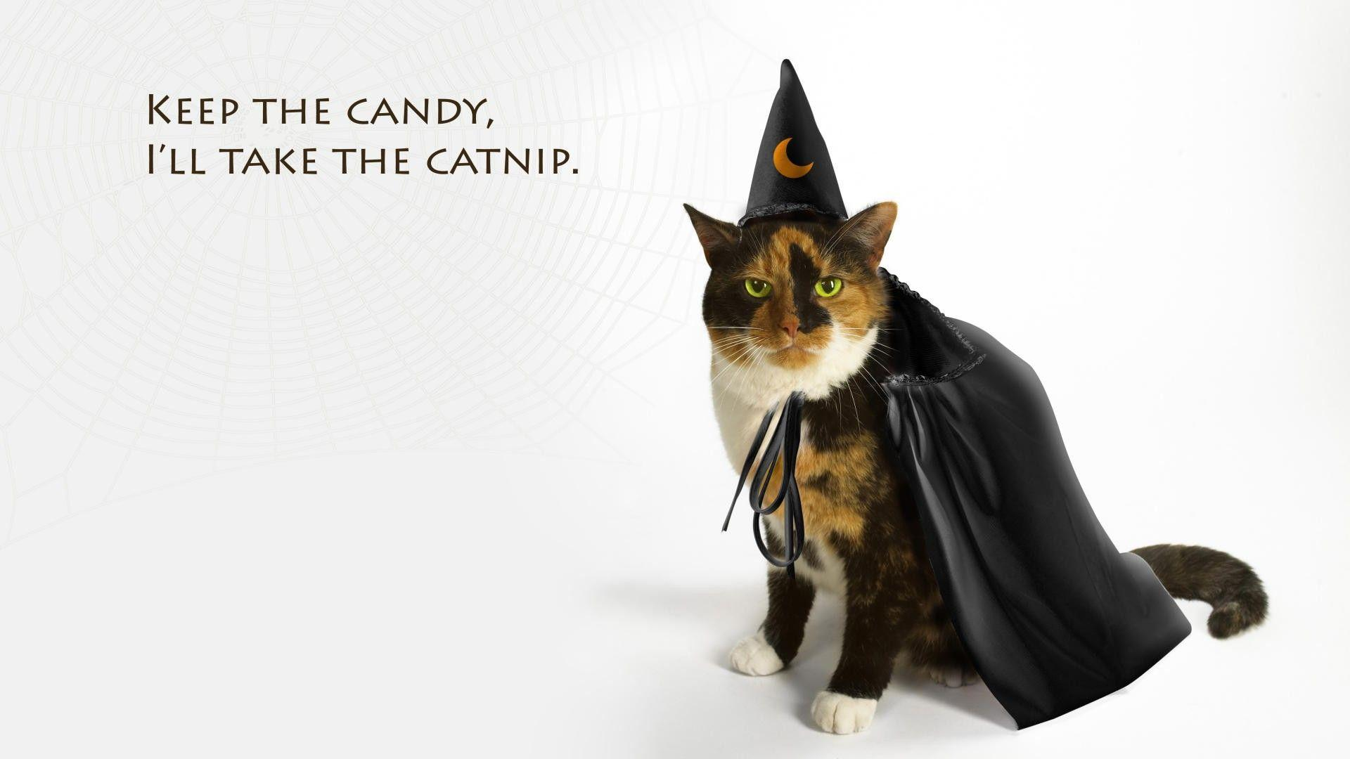 Images For > Halloween Cat Wallpaper