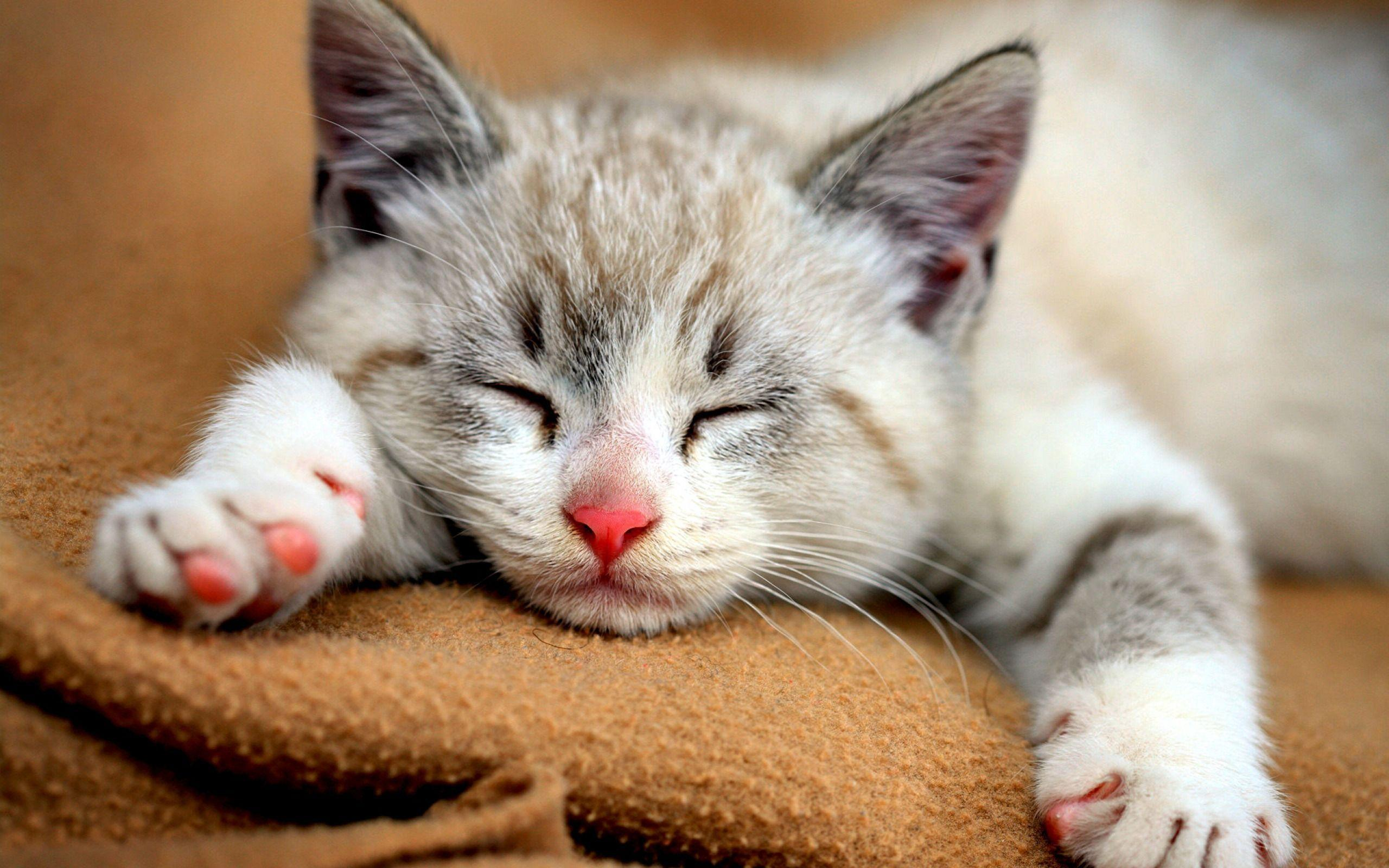 Cute Cat Wallpapers - Trawel India Mails |Cute Cat Backgrounds