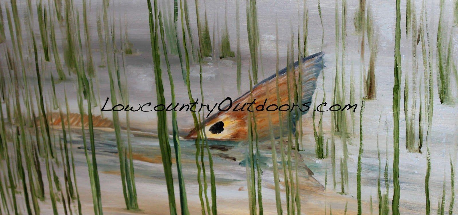 Image For > Redfish Tail Drawing