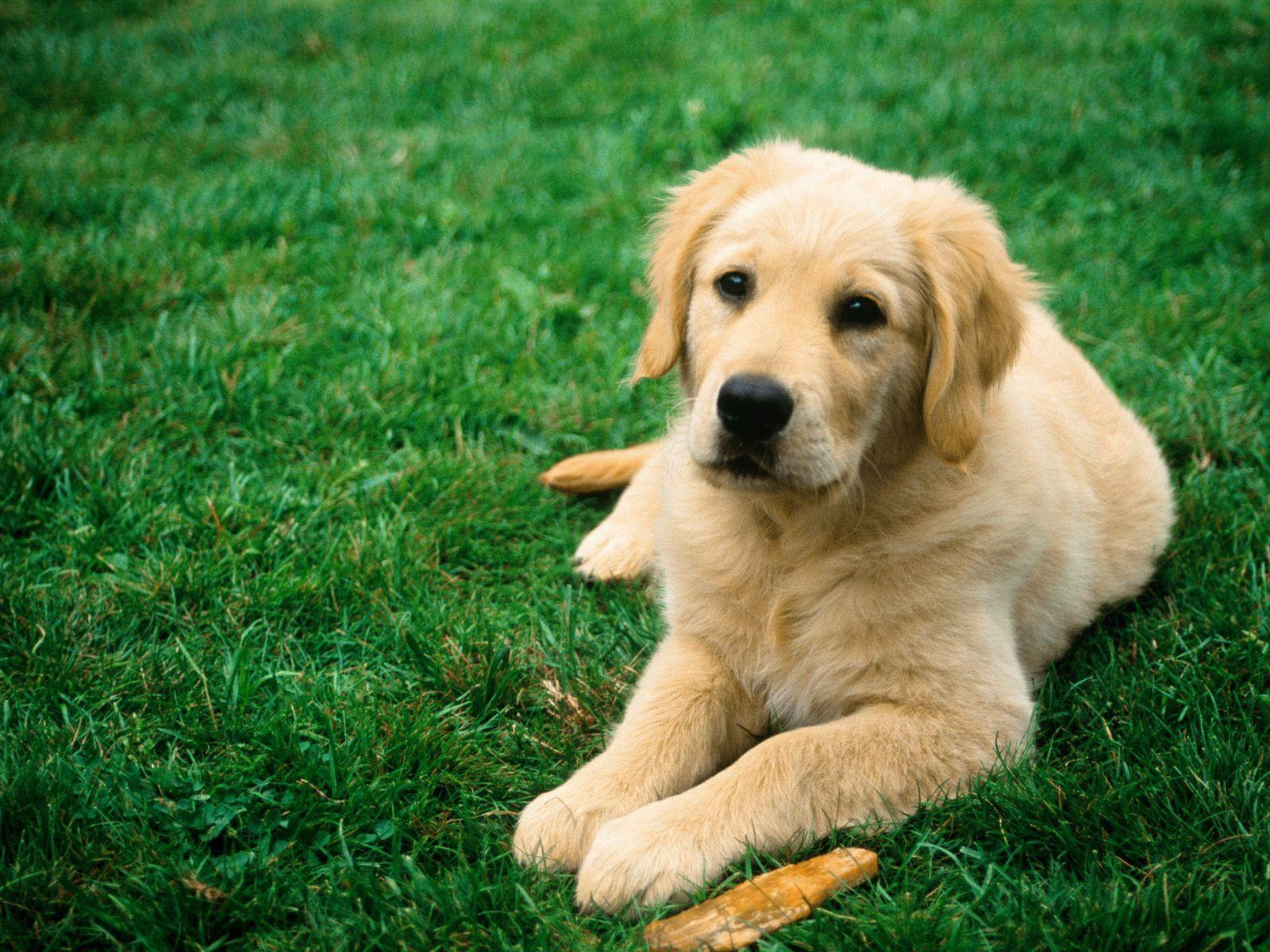 Dog Animal Wallpapers