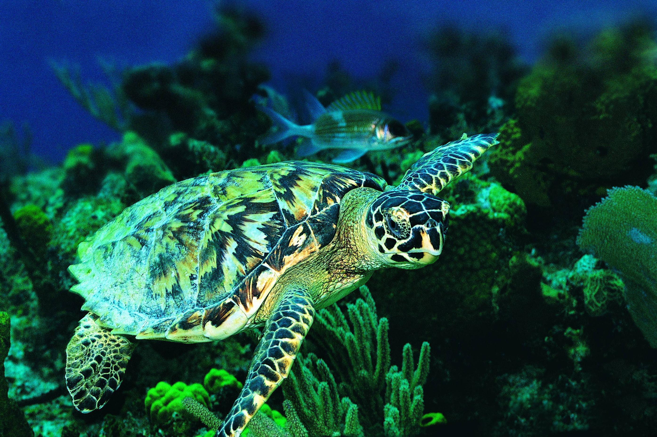 Sea Turtles Wallpapers - Wallpaper Cave