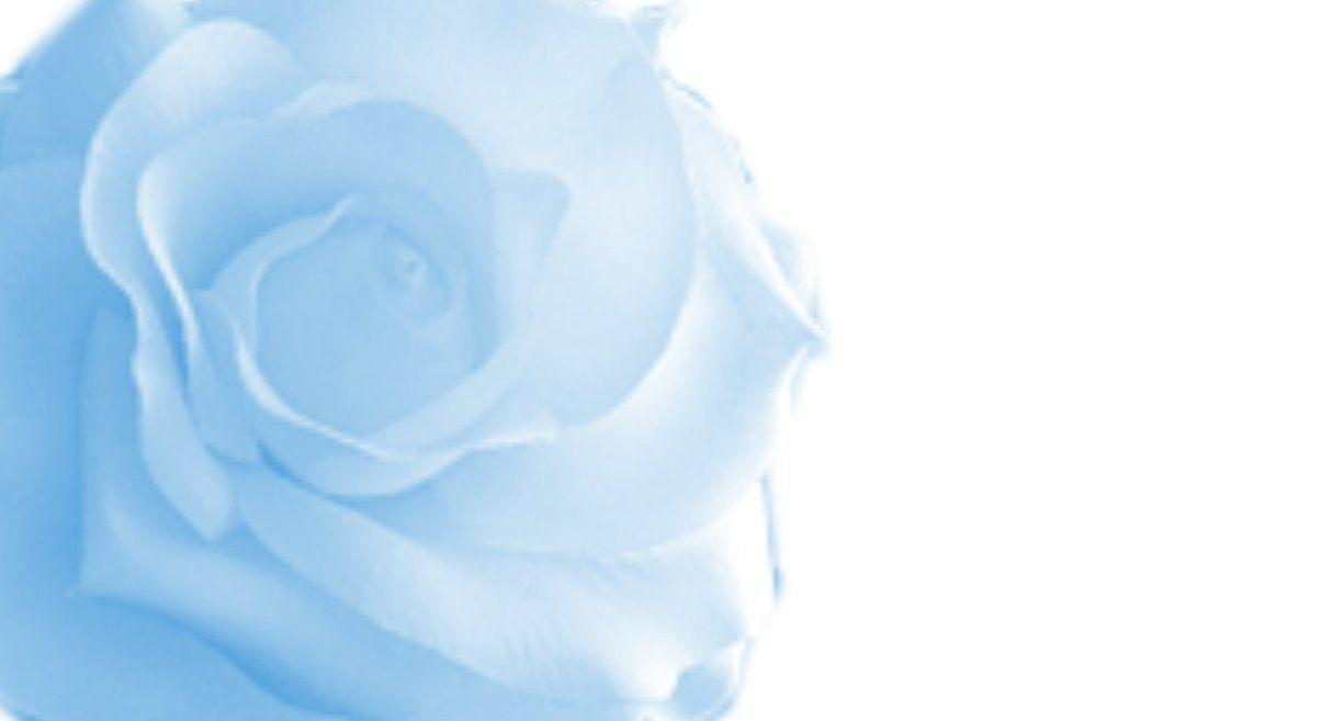 blue roses backgrounds wallpaper cave