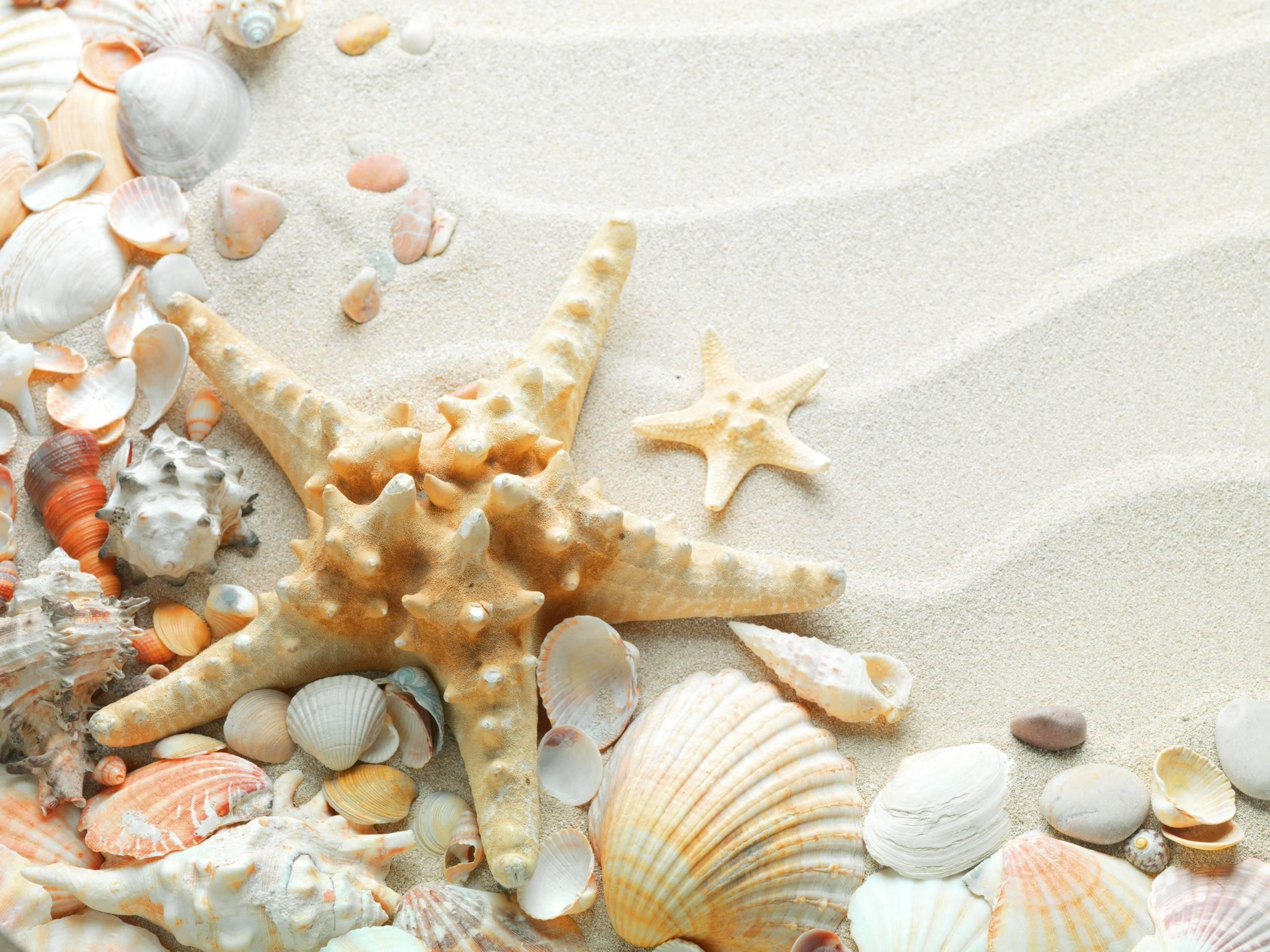 Sea Shells Wallpapers - Wallpaper Cave