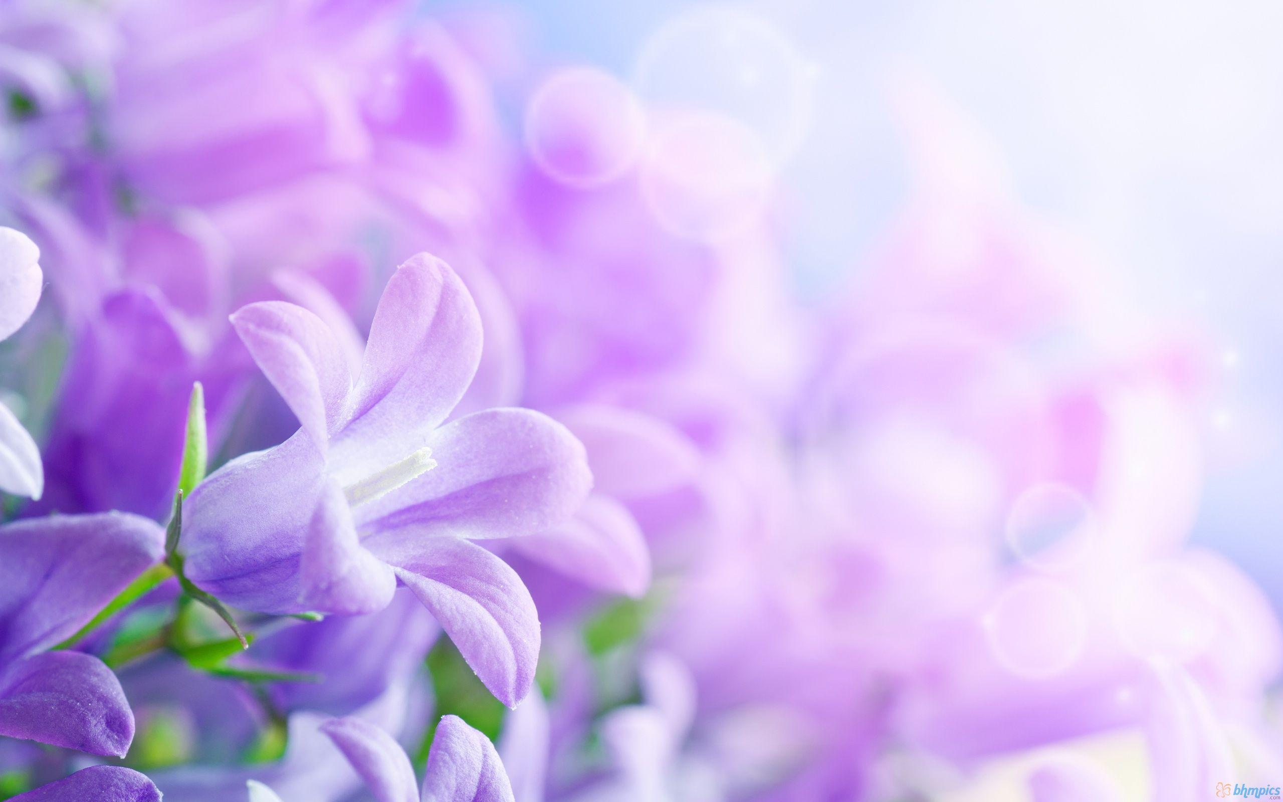 purple flowers background – 2560×1600 High Definition Wallpaper ...