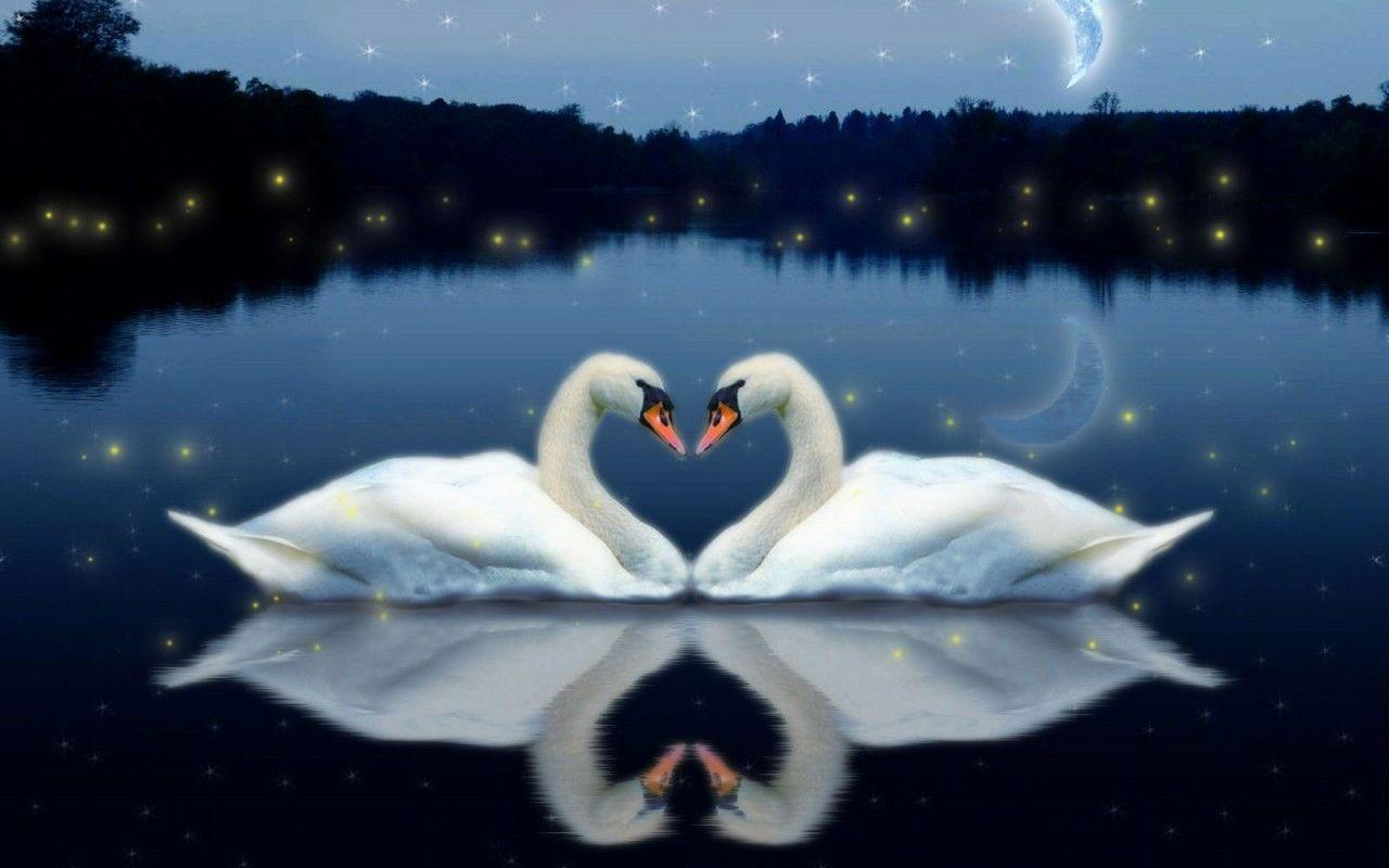 Live Wallpaper Of Love For Pc : Love Bird Wallpapers - Wallpaper cave