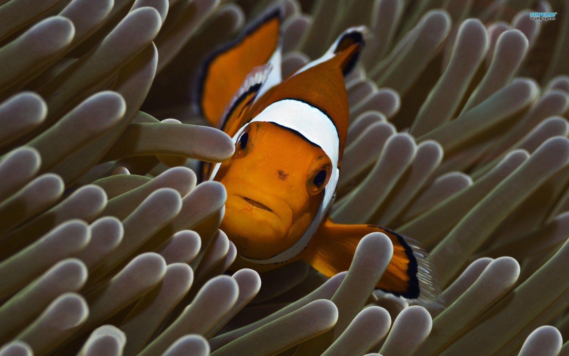 Related Pictures Animated Clown Fish Mobile Wallpapers Animated Car