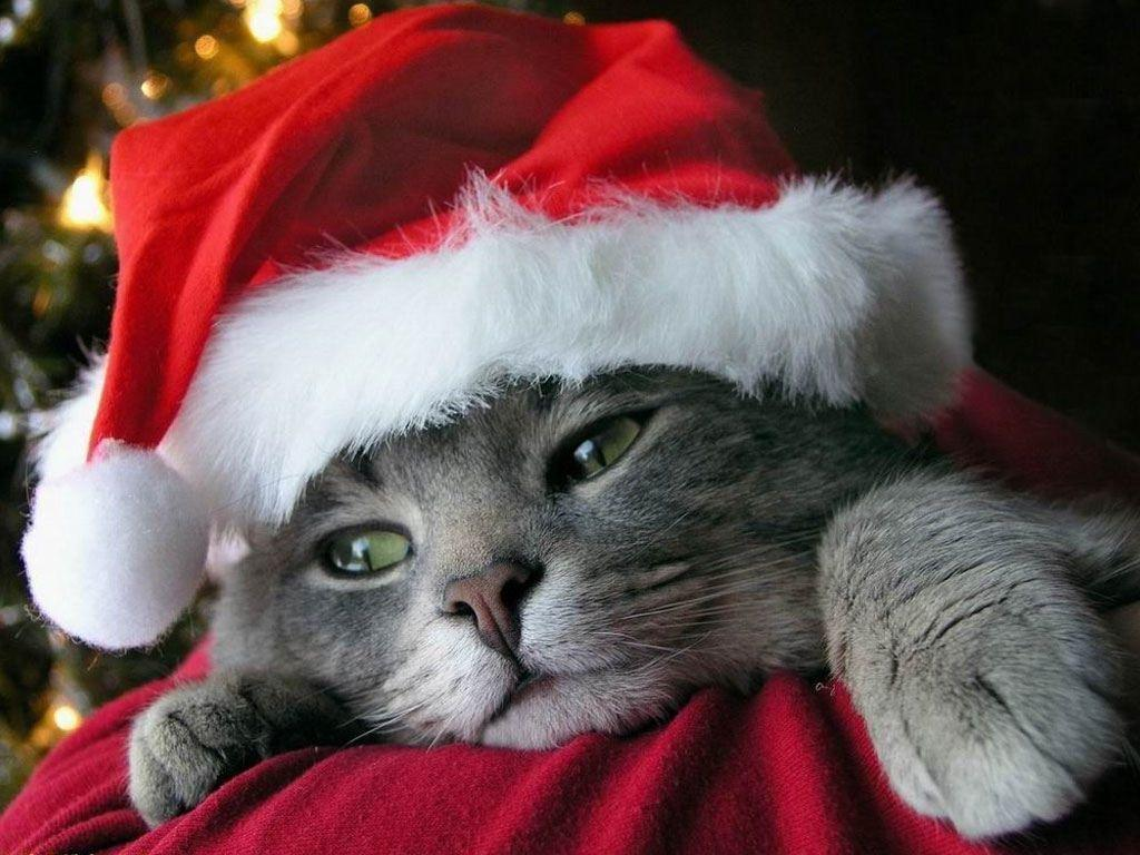 Xmas Stuff For > Christmas Puppies And Kittens Wallpaper