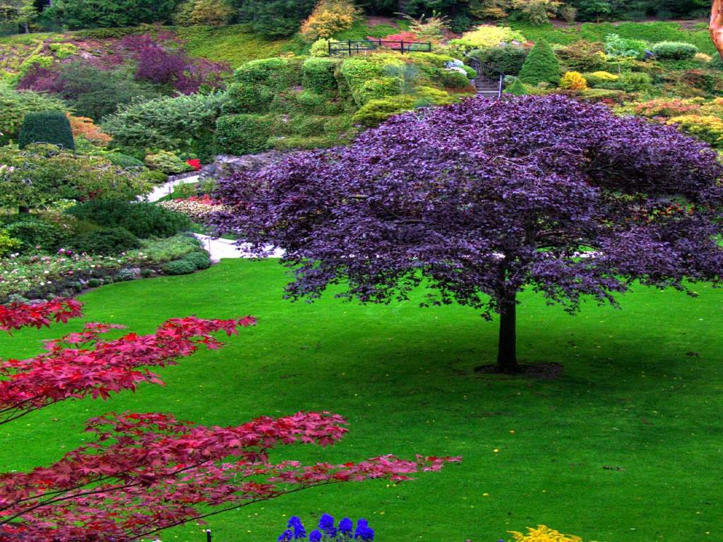Beautiful garden wallpapers wallpaper cave for Flower garden landscape