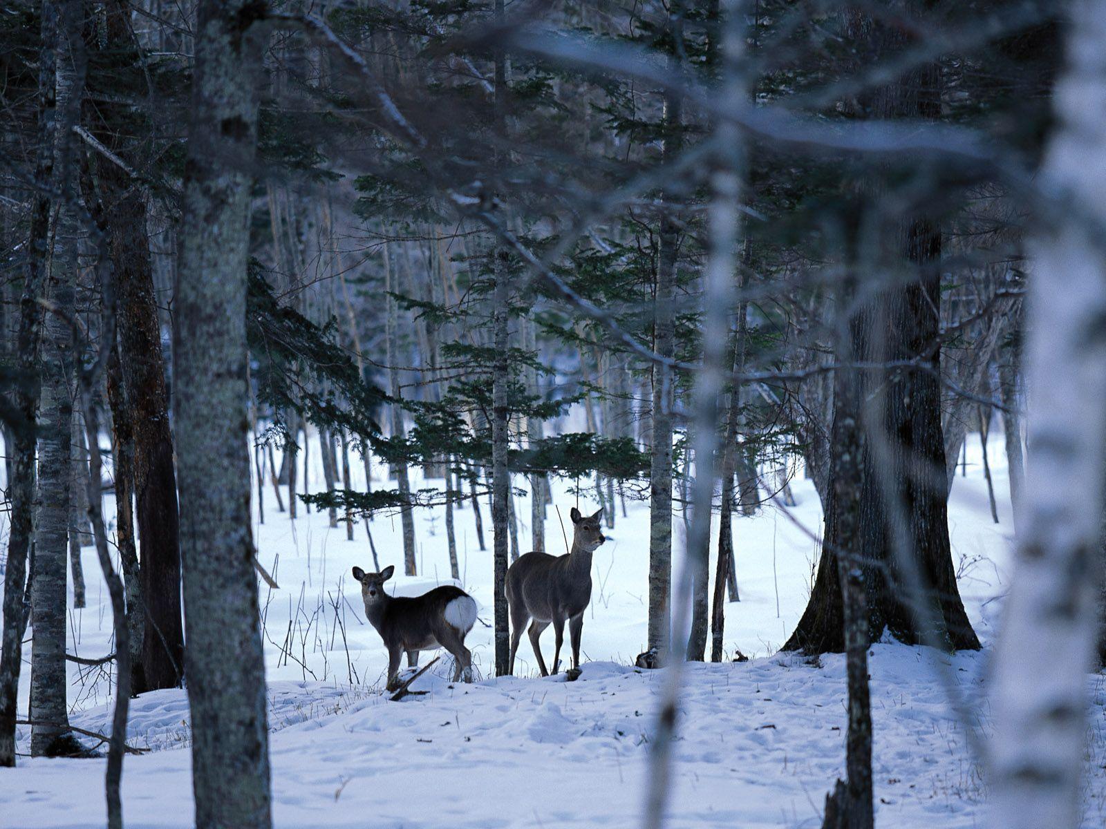 free desktop wallpaper winter scenes www