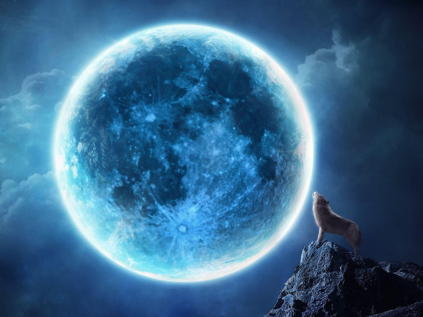 Howling Wolf At Full Moon Wallpapers