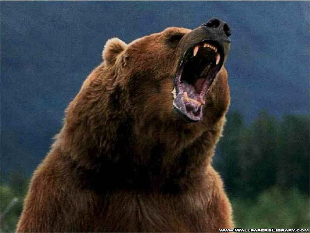 Wallpapers For > Grizzly Bear Roar Wallpaper