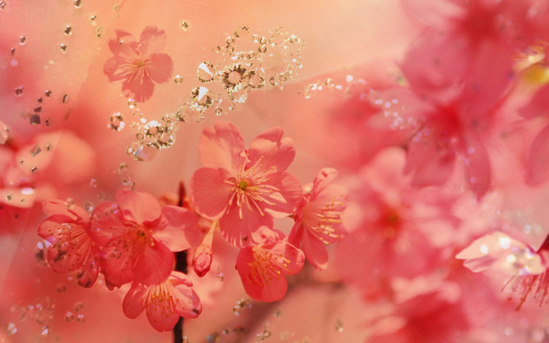 Pretty spring backgrounds