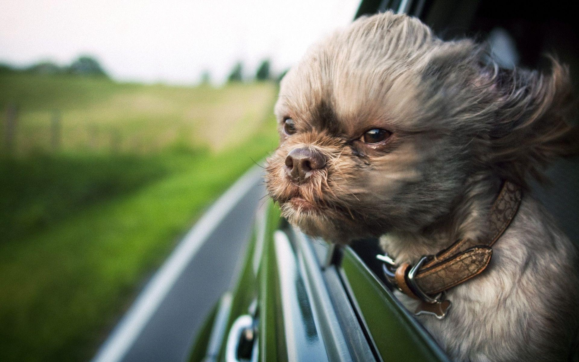 ugly dog wallpapers wallpaper cave