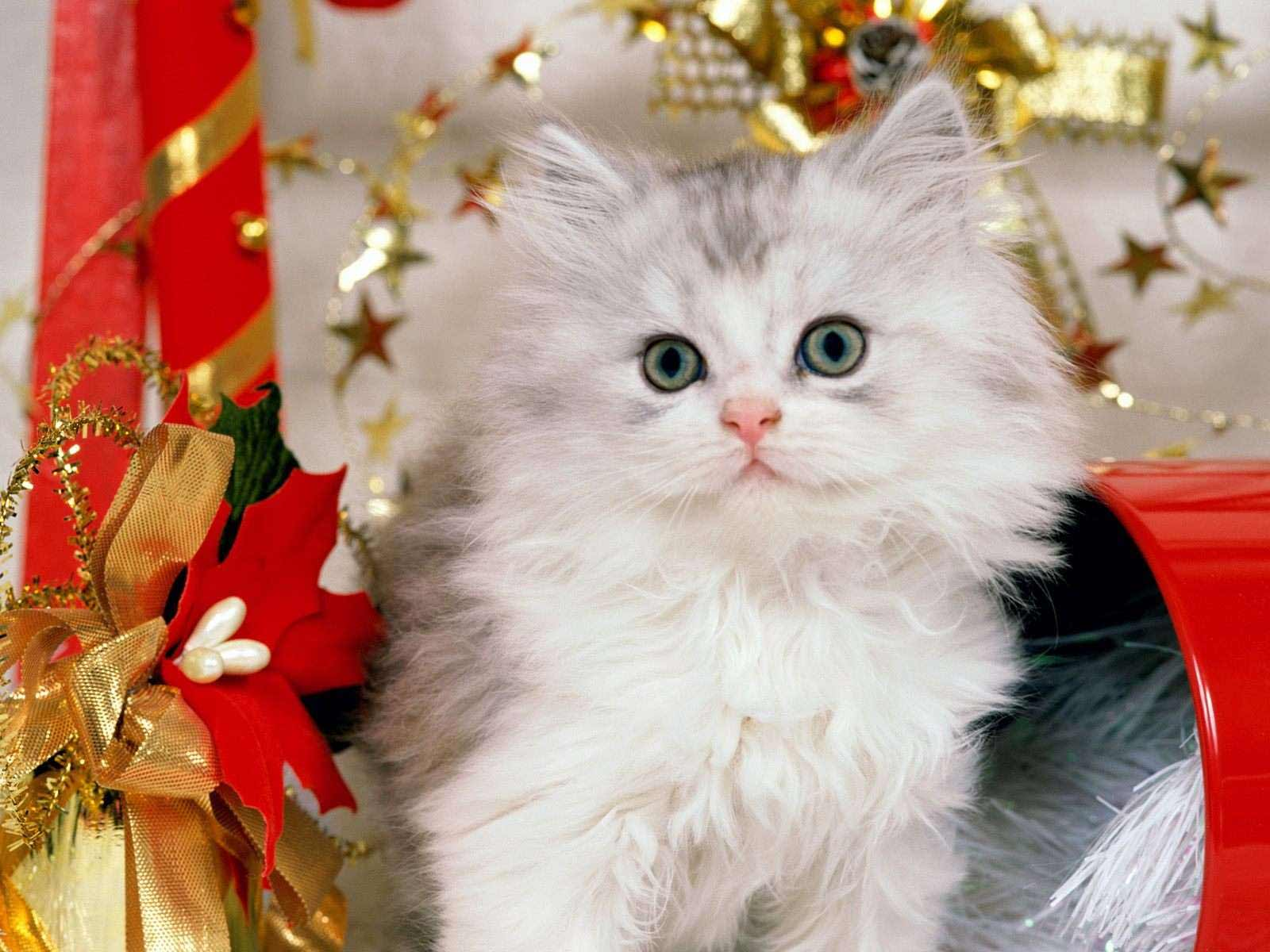 Christmas Kitten Wallpapers | Wallpapers High Definition ...