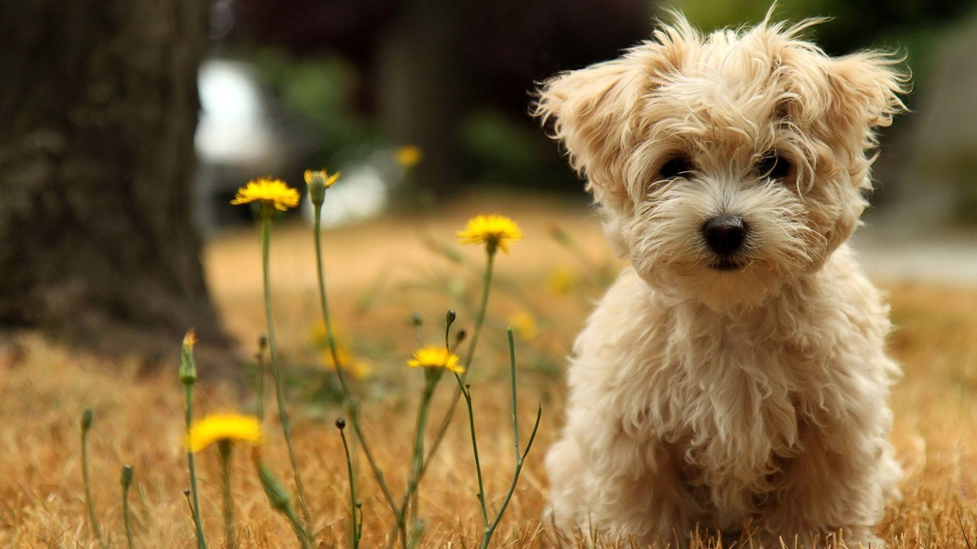 Dog Wallpapers Wallpaper Cave