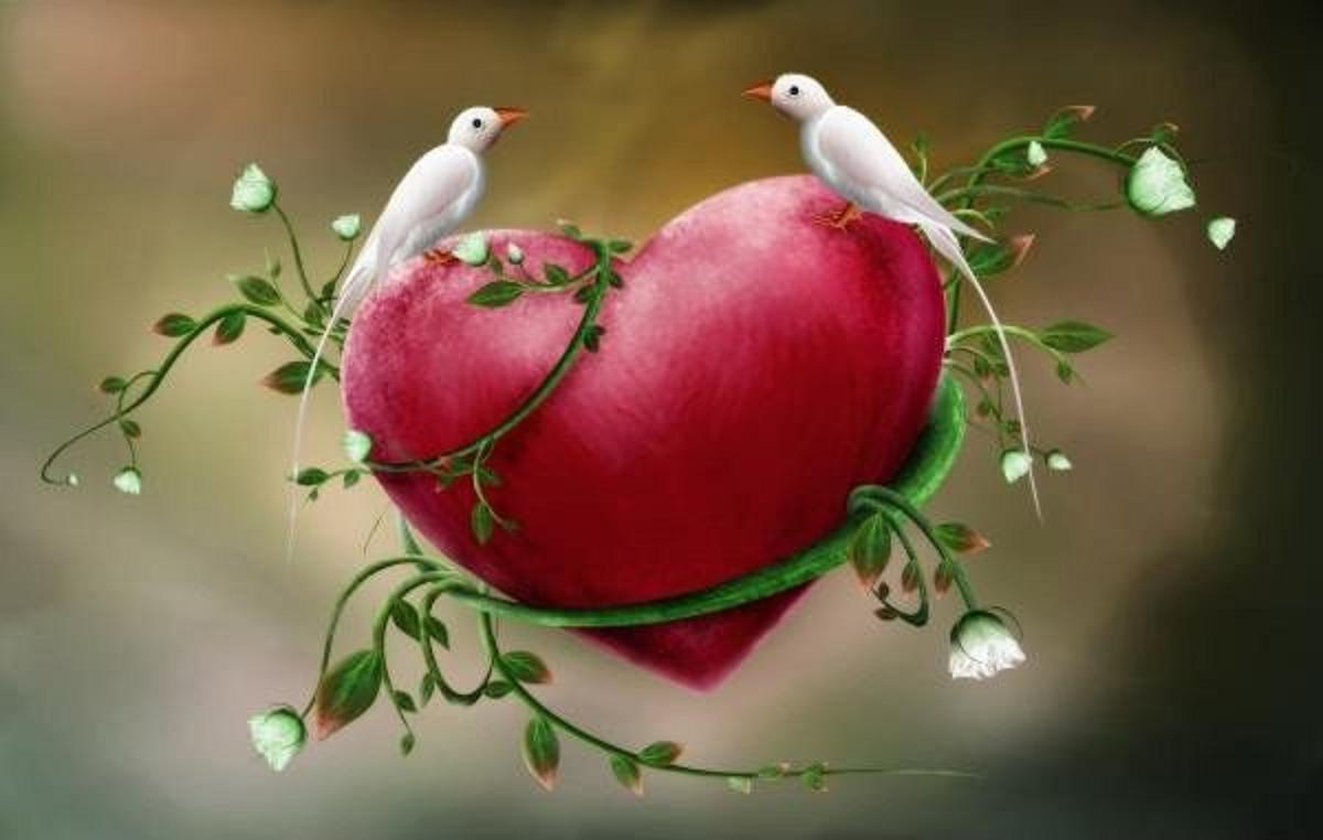 Love Dove Beautiful Wallpaper : Wallpapers Of Love Birds - Wallpaper cave