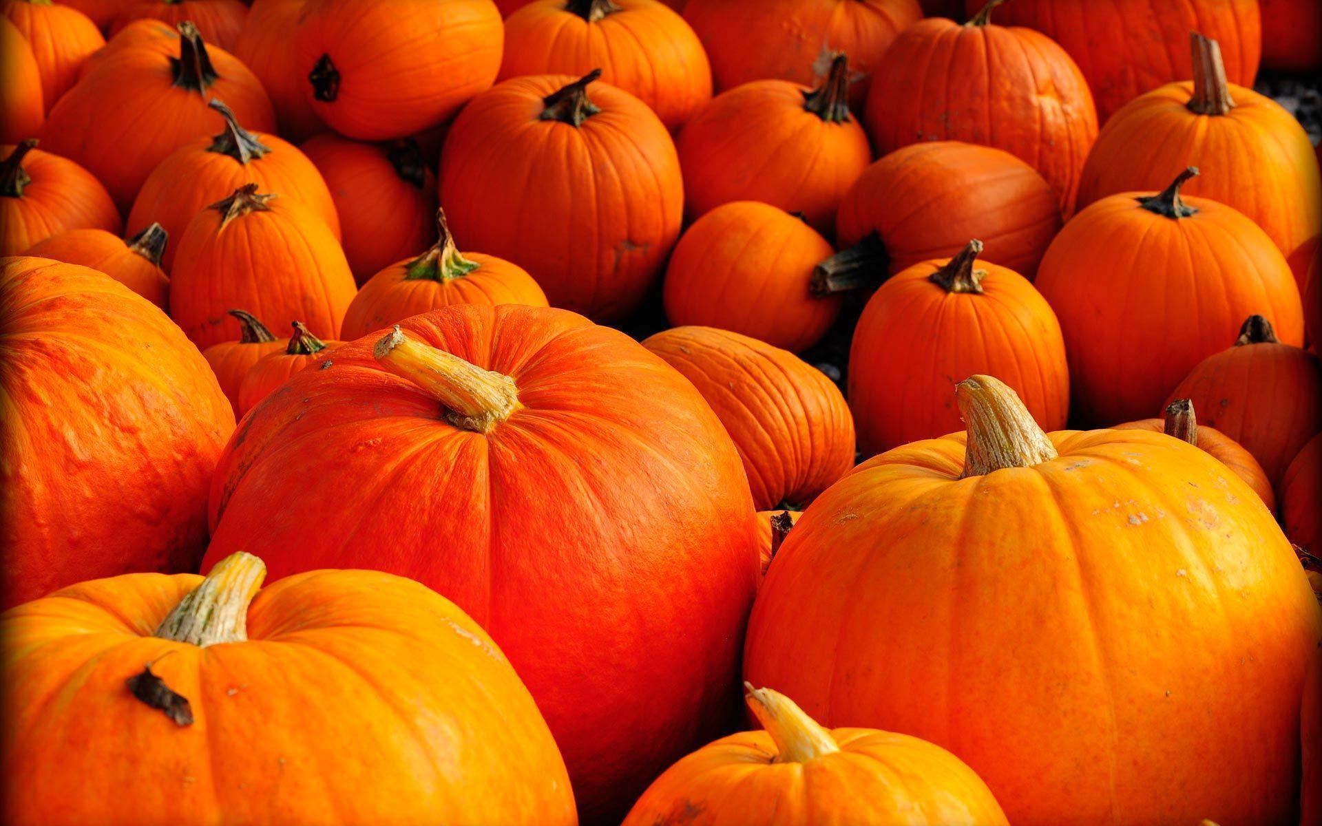 Pumpkins Wallpapers