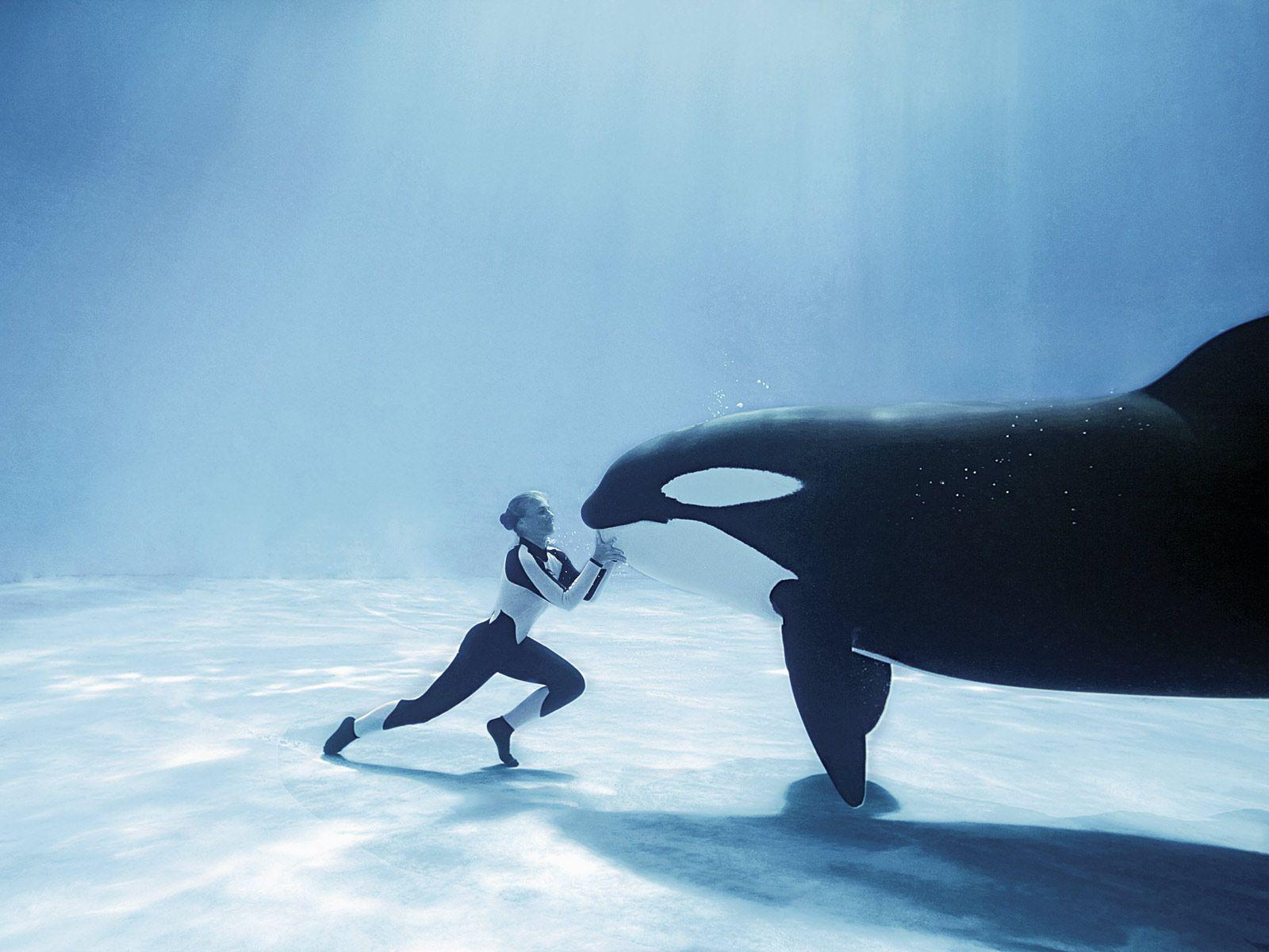 My slight orca whale obsession... on Pinterest | 22 Pins