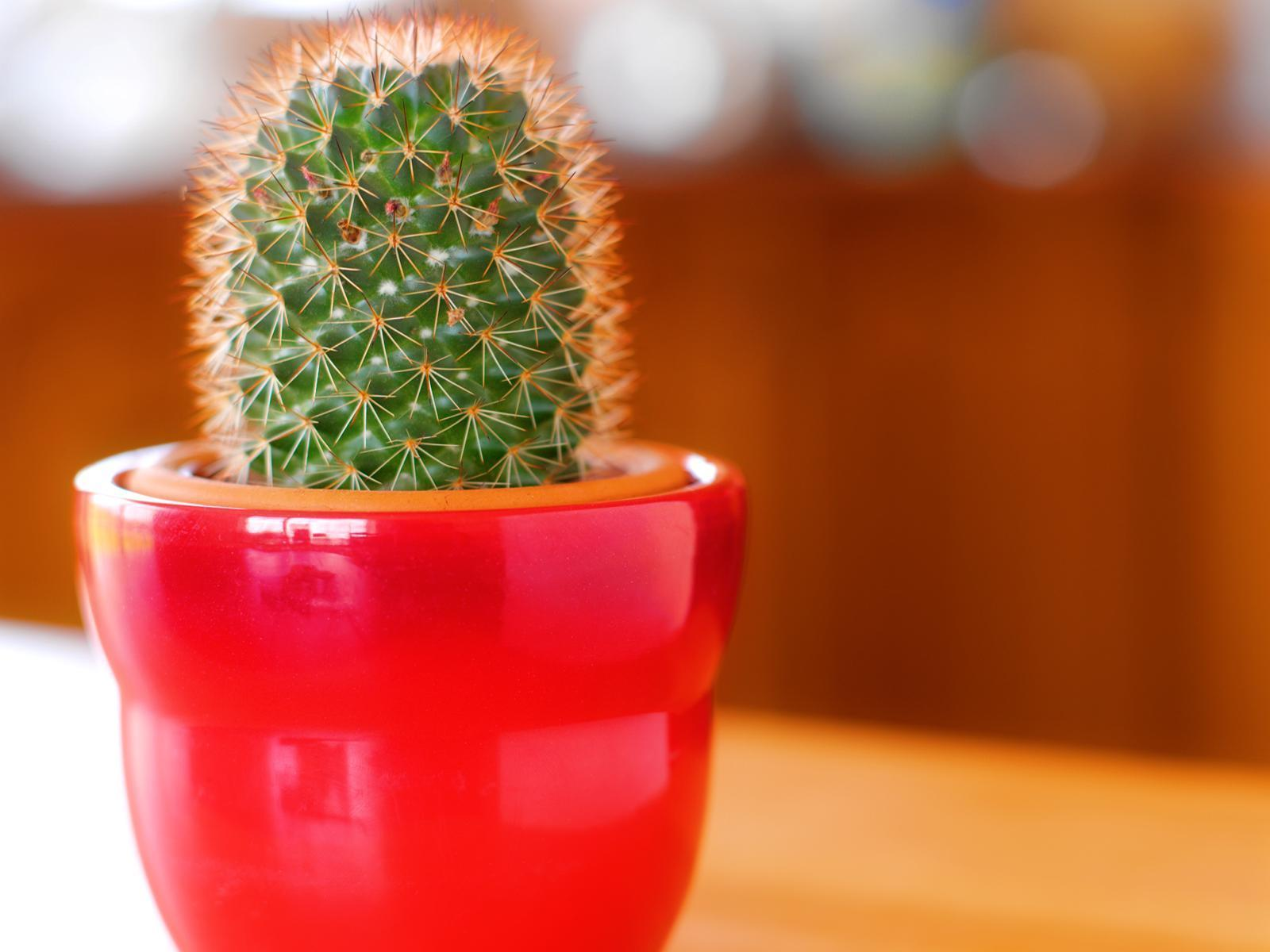 hd cactus wallpapers - photo #37