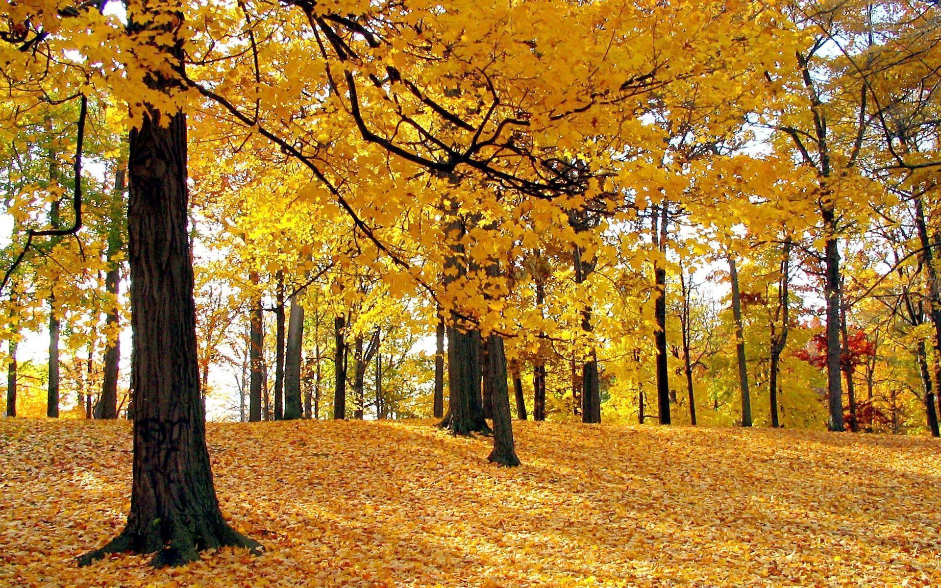 Fall Leaves Photography Wallpaper Fall Foliage Desktop W...