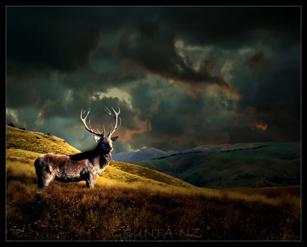 Deer Hunting Wallpapers Best Collection Of Deer Wallpapers on