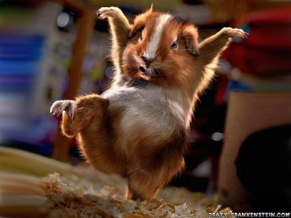 Funny animal backgrounds wallpaper cave funny animal wallpapers 16935 hd wallpapers in funny telusers voltagebd Gallery