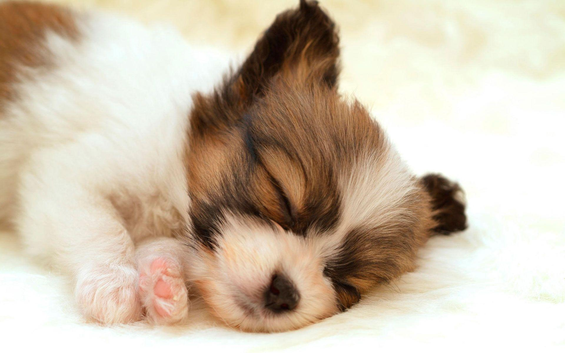 Cute Puppy Sleeping Wide wallpapers