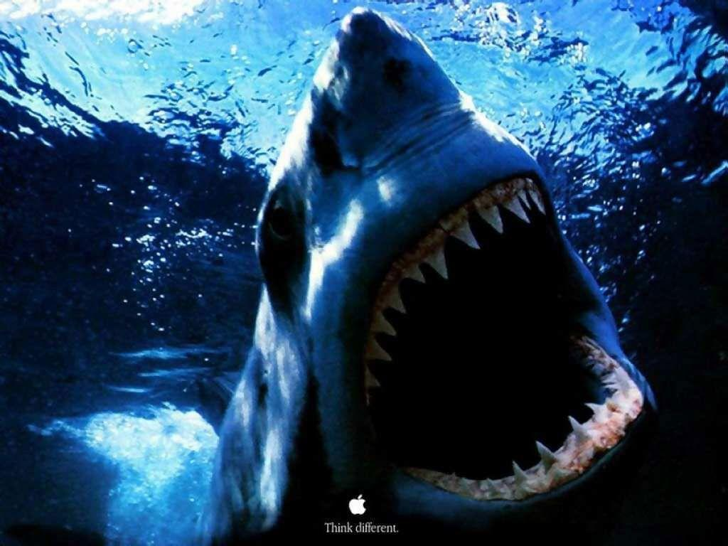 Shark HD Wallpapers - HD Wallpapers Inn