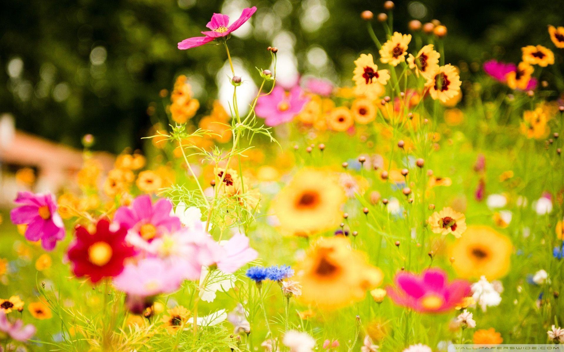 Summer Flowers Wallpapers Wallpaper
