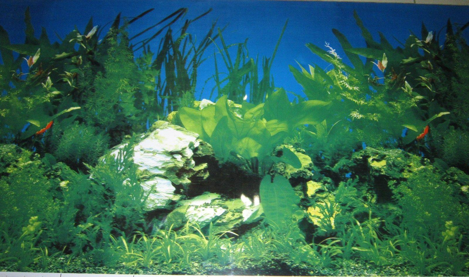 "Aquarium Background Decoration Planted and Driftwood 36"" x 23 5 ..."