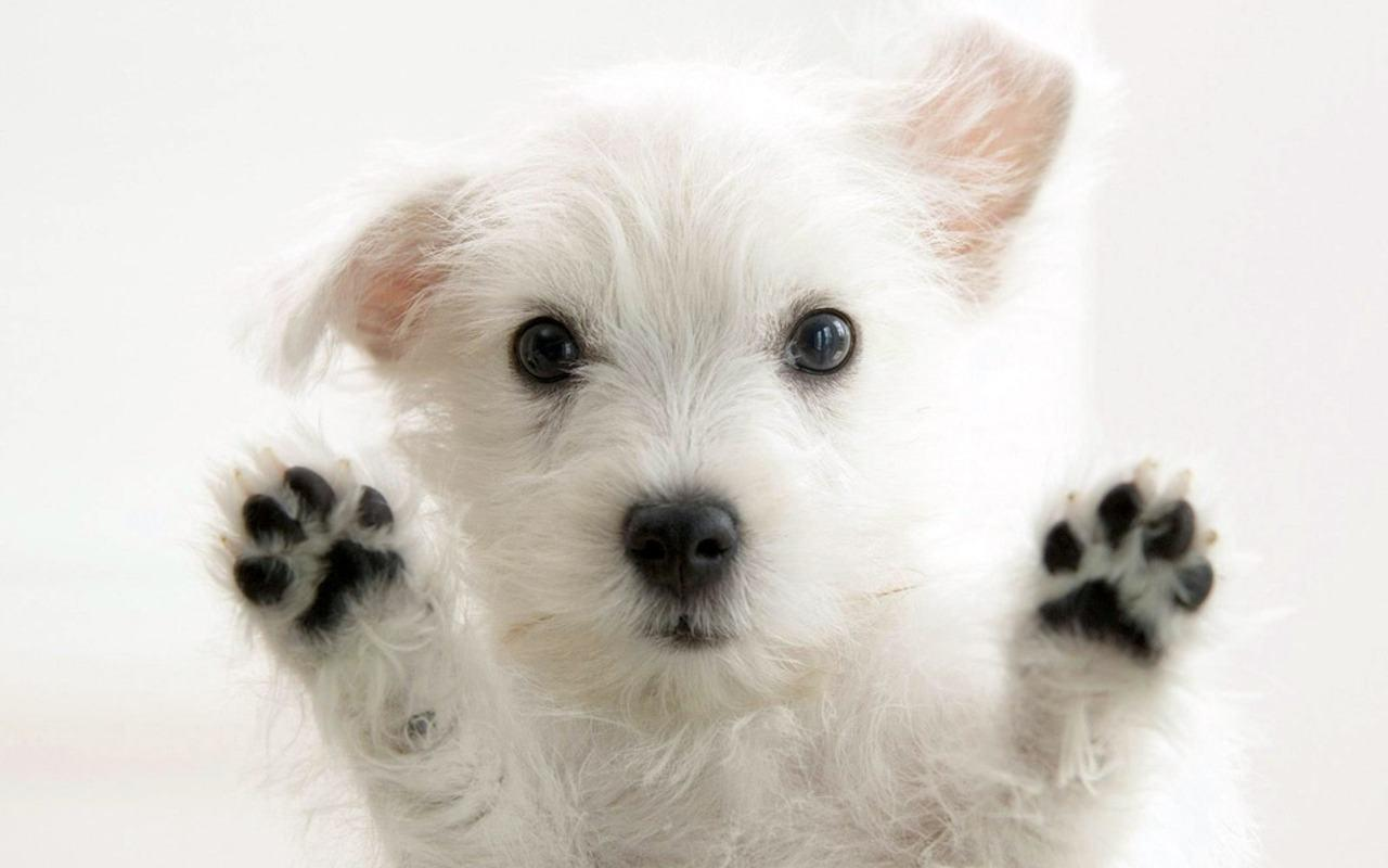 Cute Puppy Backgrounds Wallpaper Cave