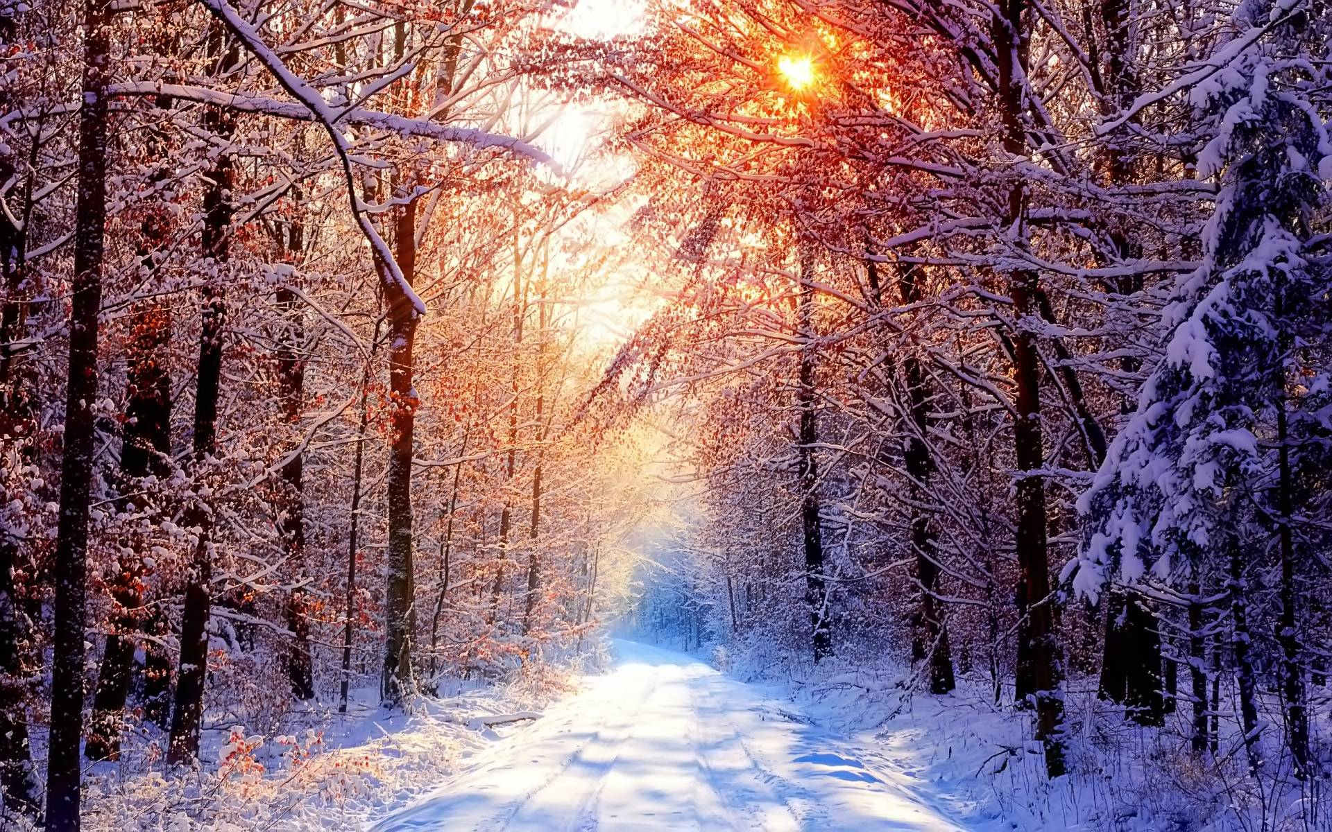 Winter Nature Backgrounds Wallpapers