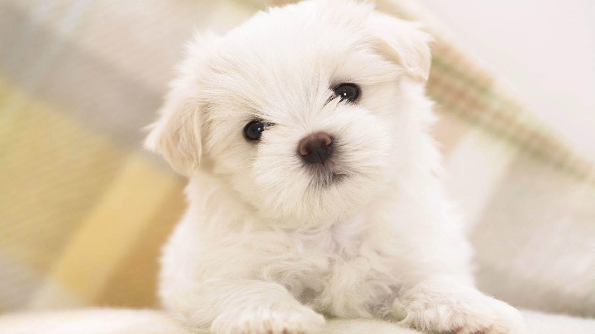 Dog Wallpapers 32