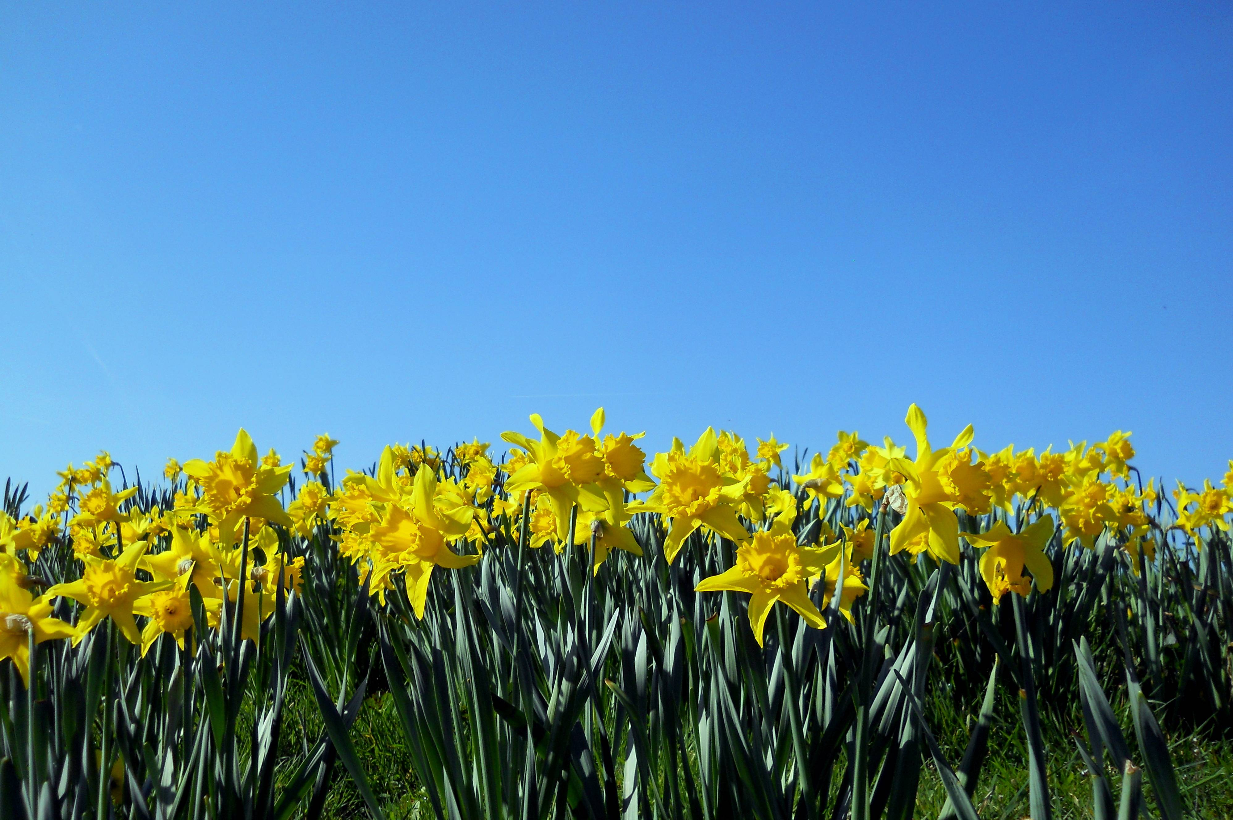 free spring wallpapers screensavers