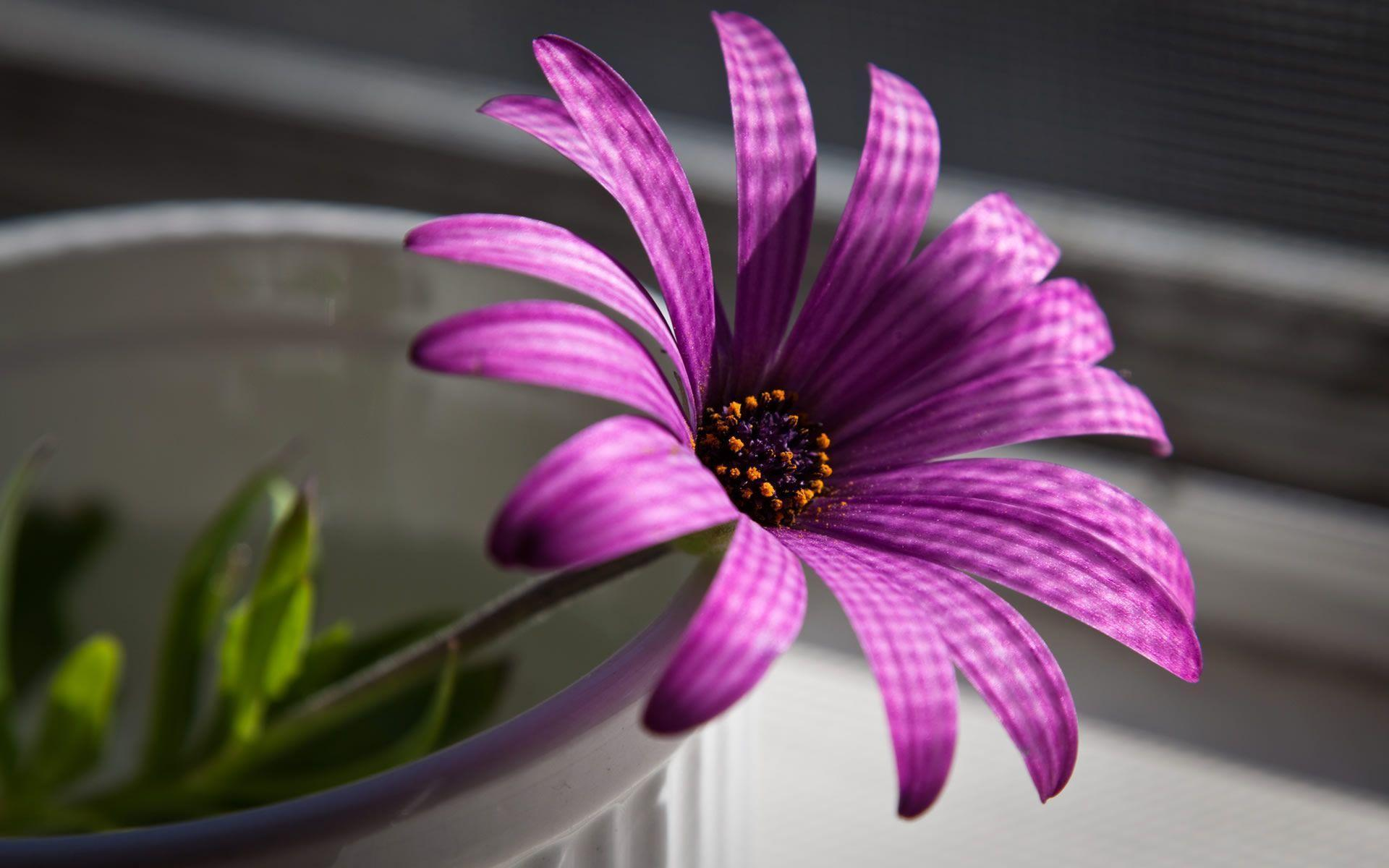 Flower Image Wallpapers - Wallpaper Cave