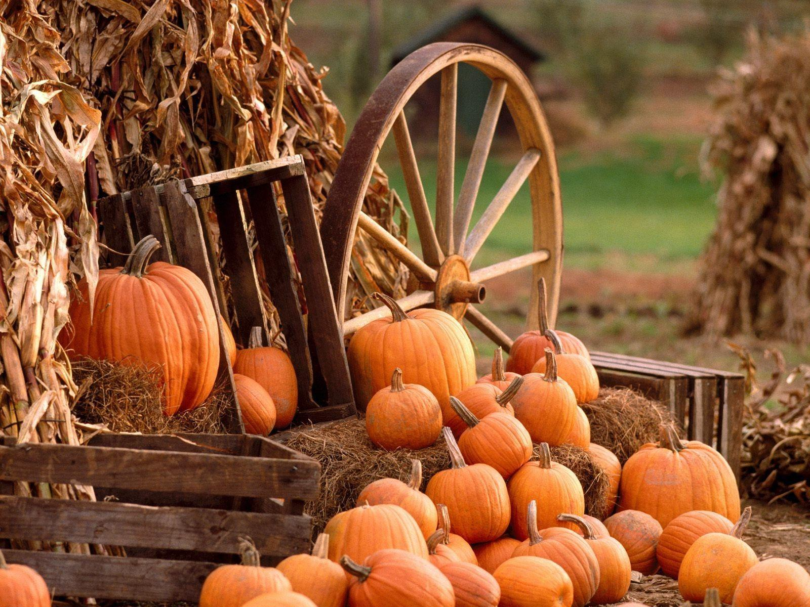 Fall Harvest Wallpapers 41189 HD Wallpapers