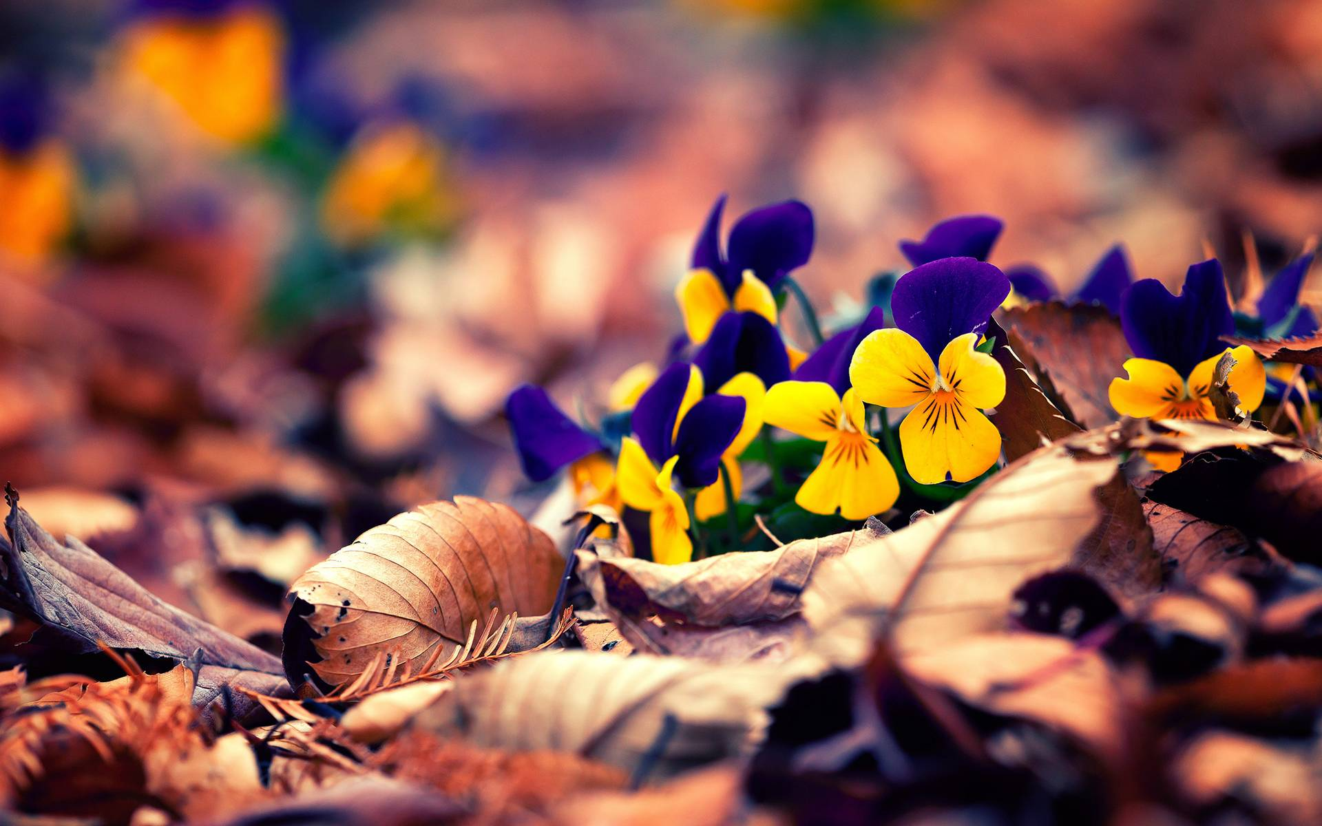 fall flowers wallpaper by - photo #1