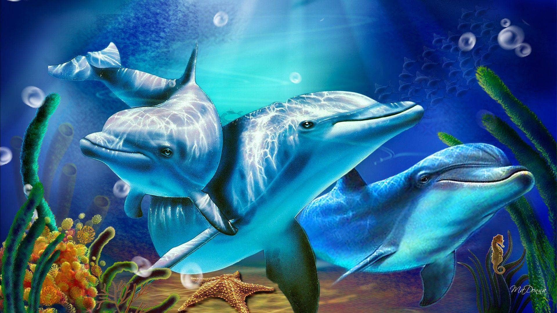 3D Living Dolphin HD Wallpapers - HD Wallpapers Inn