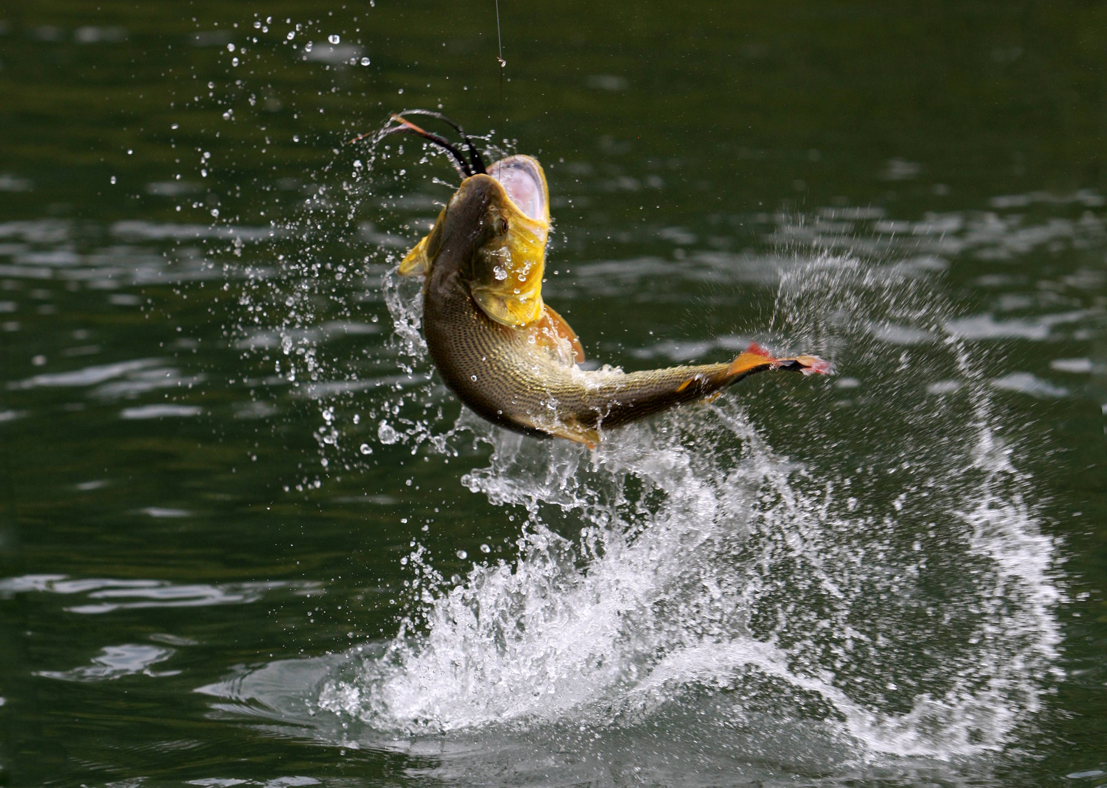 Fish R: Bass Fishing Wallpaper