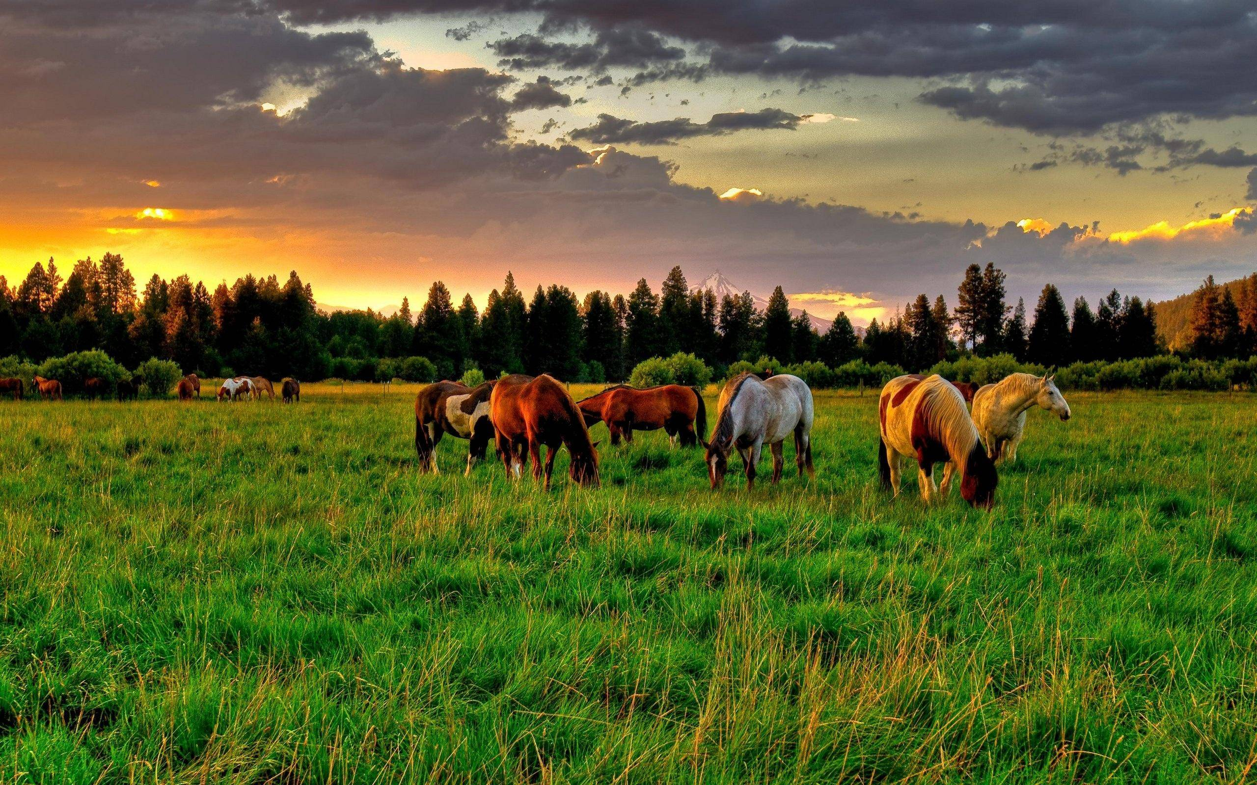 download free 2560x1600 horses grazing at sunrise desktop