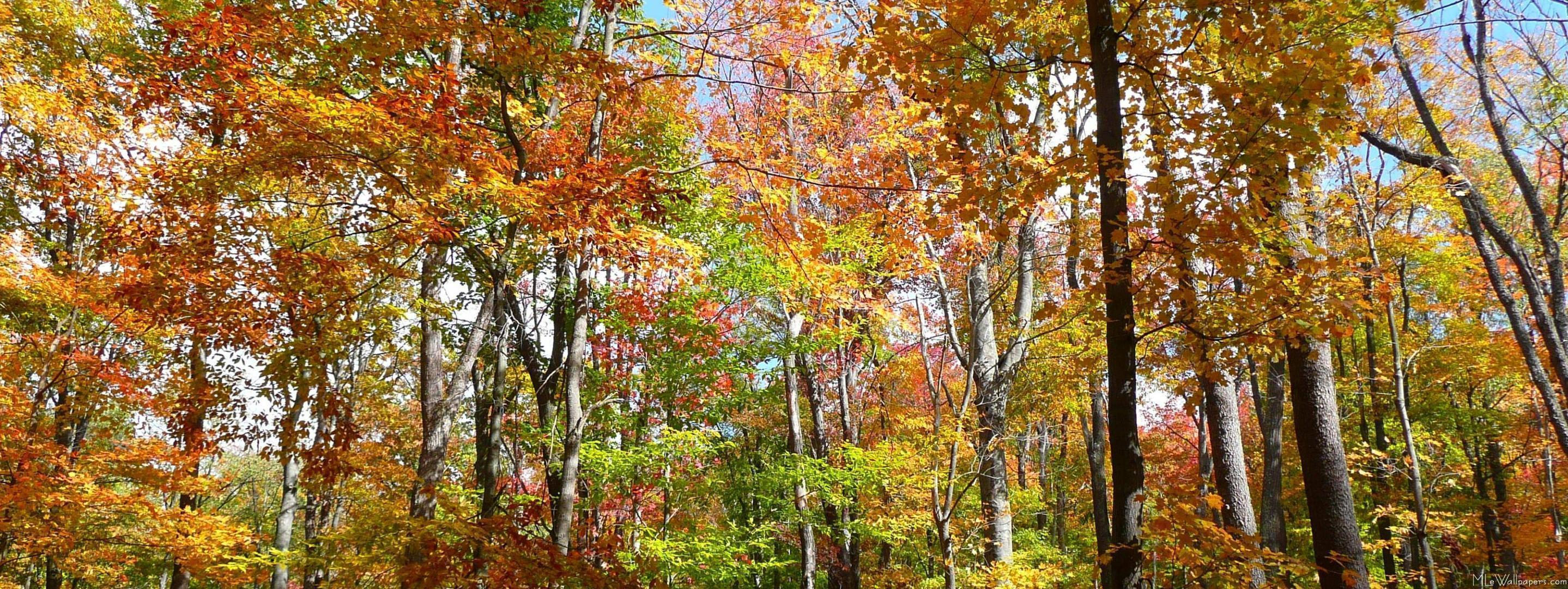 fall forest wallpapers wallpaper cave